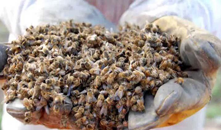 abejas uno de los animales en extinción