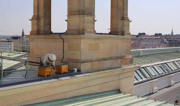 miel procedente de la apicultura urbana