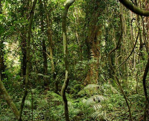 bosque de Zimbabue
