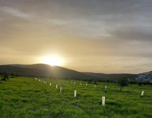 campo de plantones en Jaén