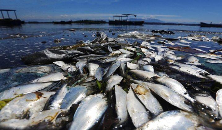 muertes de peces por la contaminación del agua