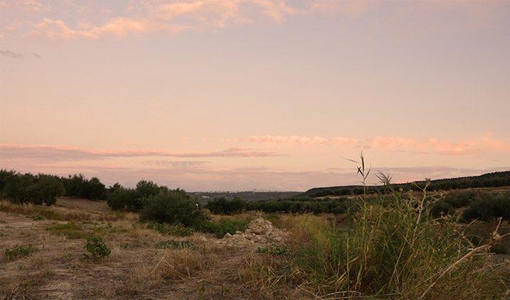 Campos de olivos enJaén