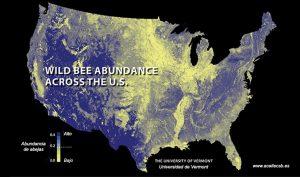 abundancia de las abejas silvestres en Estados Unidos