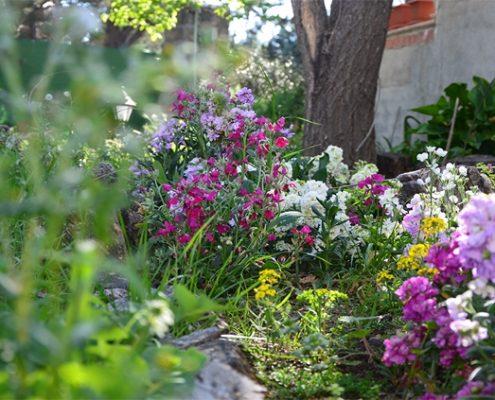 flores de mi jardín en primavera de las que saldrá una buena miel