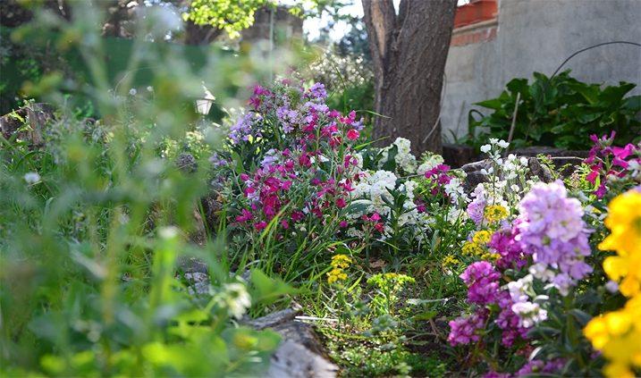 flores de mi jardín en primavera
