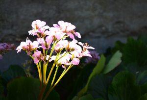 flores de Madrid