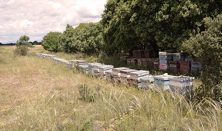 Panales de abejas del apicultor Apícola Moreno