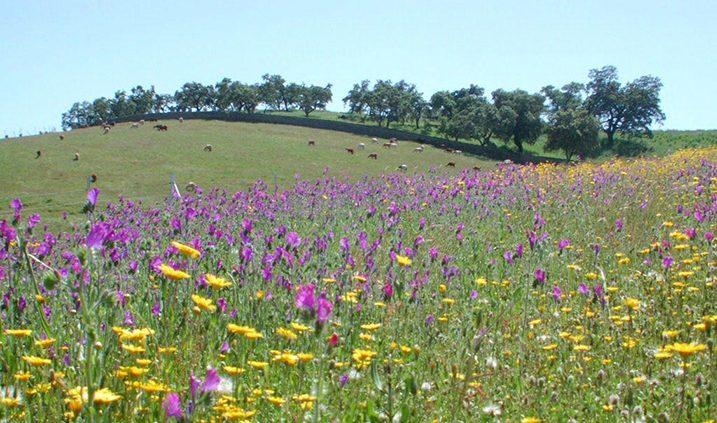 campo lleno de flores silvestres