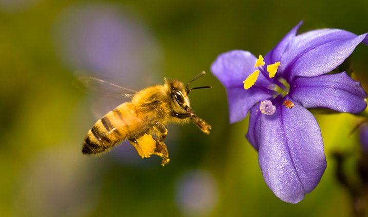 abeja polinizando una flor