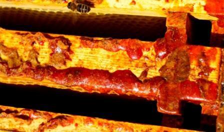 propiedades del propóleo que nos dan las abejas