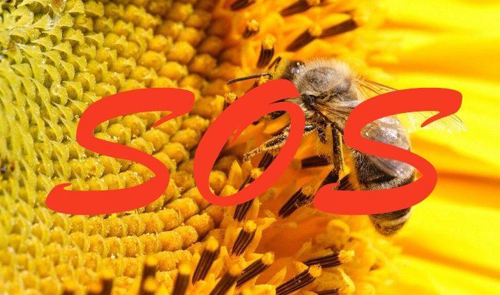Soso para las abejas