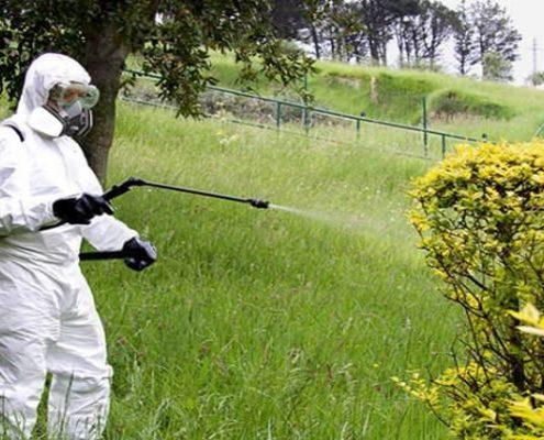 fumigación de plantas