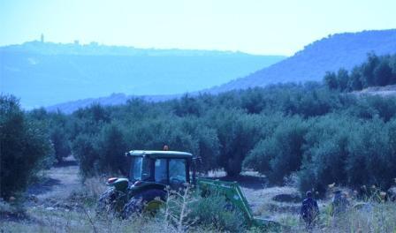 labores de campo en un olivar