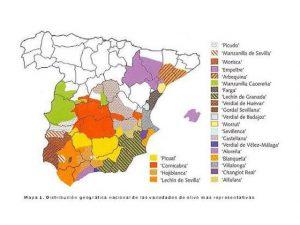 Variedades de aceituna en España