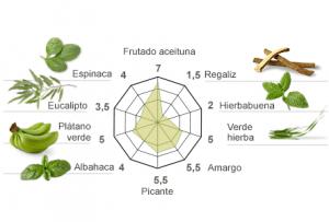 Aromas del picual de Casas de Hualdo