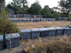 Colmenas de abejas en verano