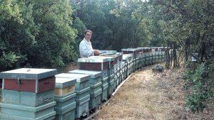 Recogiendo la miel de apícola Moreno