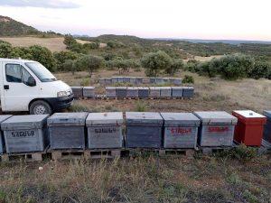 Fotos de los apiarios de Moreno