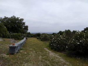 Colmenas de abejas en Brihuega