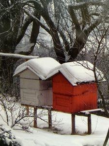 Dos colmenas con nieve