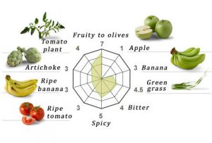 characteristics of arbequina variety